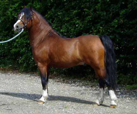 Claus Holm Slow Juicer Test : view topic - .:Soaring Hearts StablesHorse and Rider RPAcceptingv2:. - Chicken Smoothie
